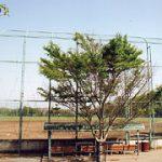 干潟さくら台野球場