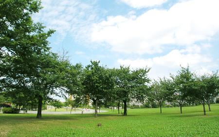 大島小松川公園(野球場)