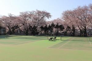 町田中央公園(テニスコート)