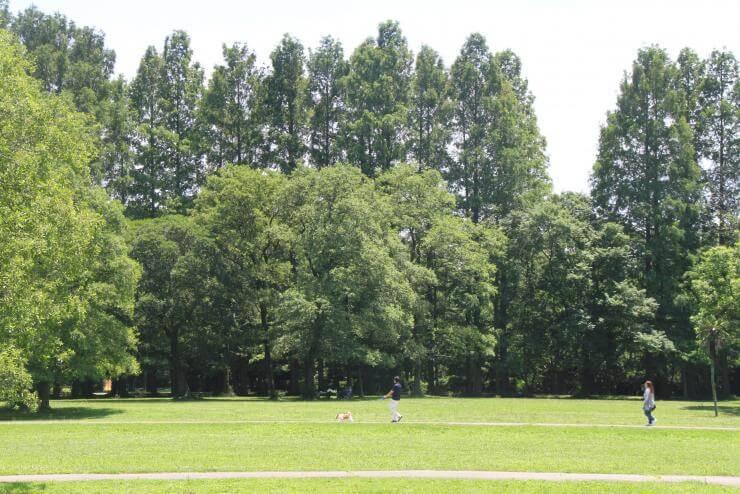 秋ヶ瀬公園(野球場/サッカー場/テニスコート)