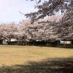 笠幡公園野球場