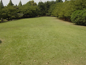 いずみ総合公園